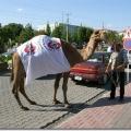 gediz-belediyesi-tarhana-festivali-1